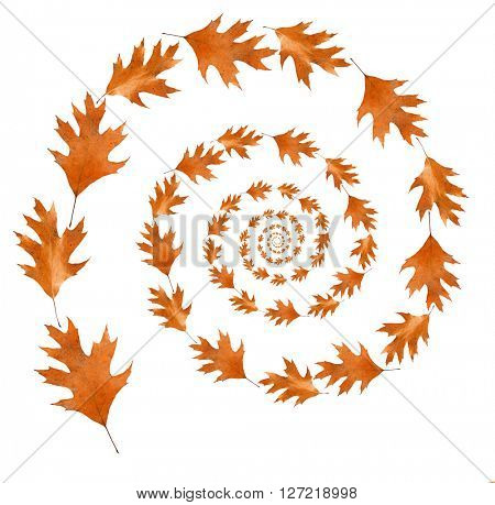 Dry autumn leaves shaped as spiral isolated on white