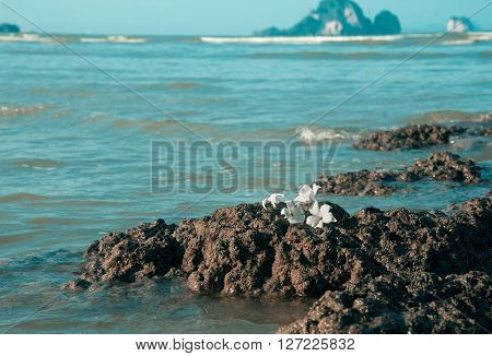 white flowers on rough stone against blue sea