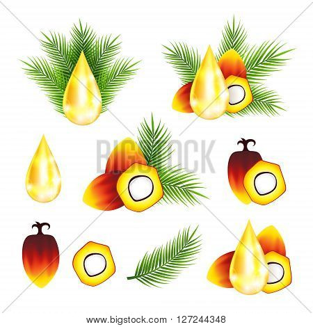 Oil palm fruits with drop of oil  and leaves vector illustrations