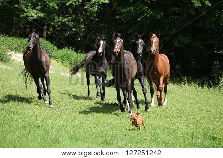 Beautiful Herd Of Horses Running Together