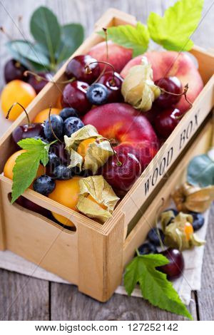 Summer fruits in a crate with nectarines, apricots and cherry
