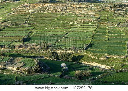 Green Fields In Malta