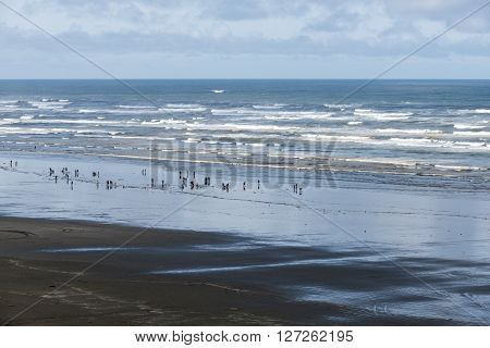 People digging for clams on the Washington coast