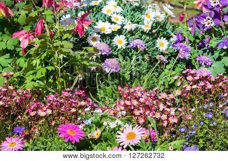 Early Flowering Plants In A Nursey