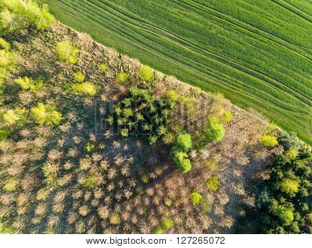 Aerial view of forest and fields. Spring season.