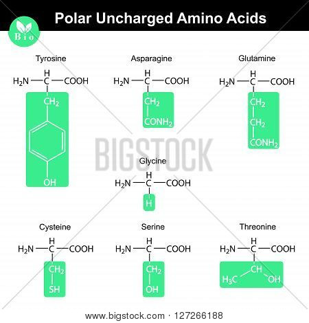 Set of polar uncharged amino acids with marked radicals - tyrosine asparagine glutamine cysteine glycine serine threonine molecular structures 2d vector eps 8