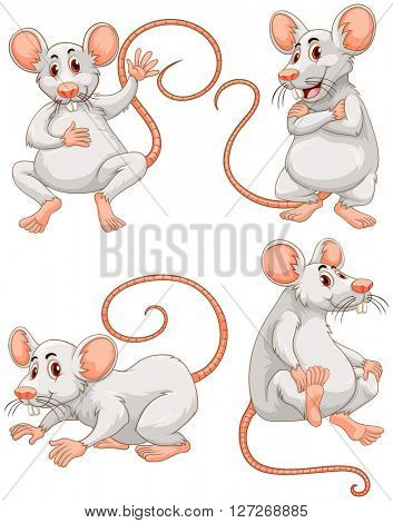Mouse in four different actions illustration