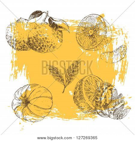 Vintage Ink hand drawn collection of citrus fruit sketch - lemon, tangerine, orange. Vector illustration of highly detailed citrus fruits