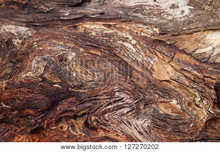 texture of snag, texture piece of wood