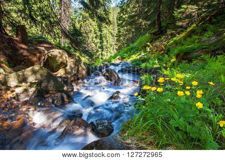 Rapid mountain stream in the green forest glowing by sunlight. Dramatic and picturesque scene. Location place National park Chornogora, Carpathian, Ukraine, Europe. Artistic picture. Beauty world.