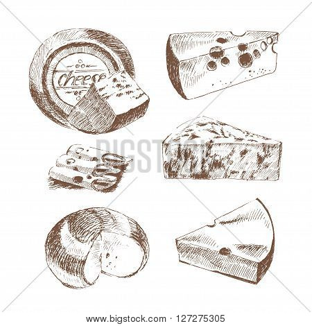 vector cheese sketch drawing designer template. farm food collection. hand drawn dairy products