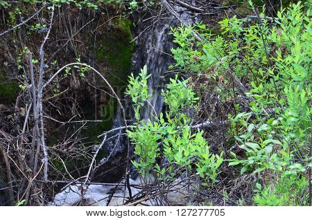 Green bushes in the woods and a small stream in the Taiga