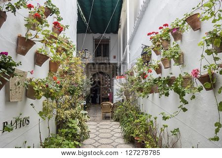 Courtyard decorated with geraniums Cordoba Spain Europe