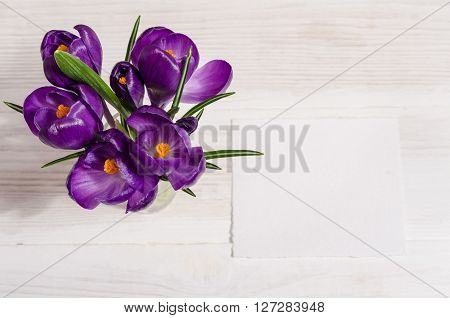 Bouquet From Crocus Flowers In Vase  On White Wooden Table With Empty Card For Your Text