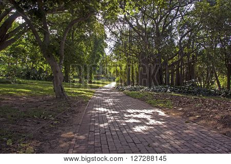 Paved Brick Walkway Leading Into Botanicil Garden Shaded Landscape