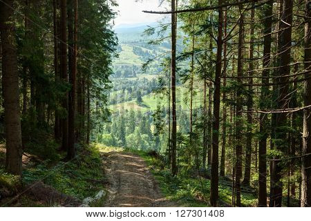 Forest road with views of the surrounding area Vorokhta, Carpathian Mountains, Ukraine.