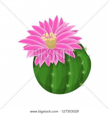 Cactus plant with flowers. Blooming cactus. Vector illustration
