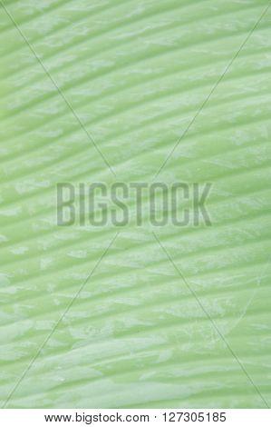 close up fresh green banana leaves background