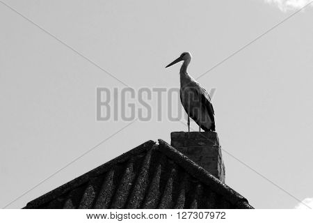 Alone stork on roof, black and white photo