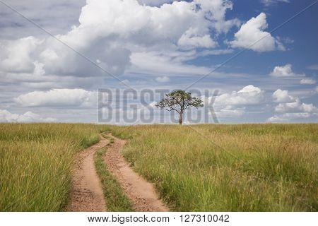 Road going through the Maasai Mara national park (Kenya)