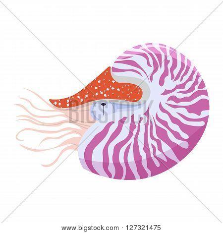 Nautilus Pompilius vector illustration isolated on white background