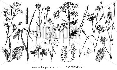 Hand drawn set with black and white herbs and flowers