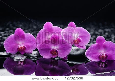 still life with orchid and black stones