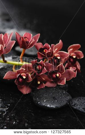 Red branch orchid with black stones on wet pebbles