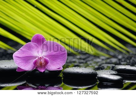 Pink orchid with palm and stones on wet background