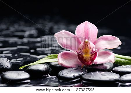 spa concept â??orchid with stones and green plant
