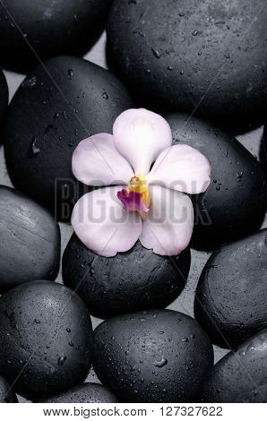 White orchid with therapy stones