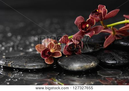 branch orchid with therapy stones