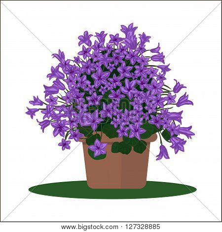 Vector illustration plant in pot. Blooming flower. Bellflower