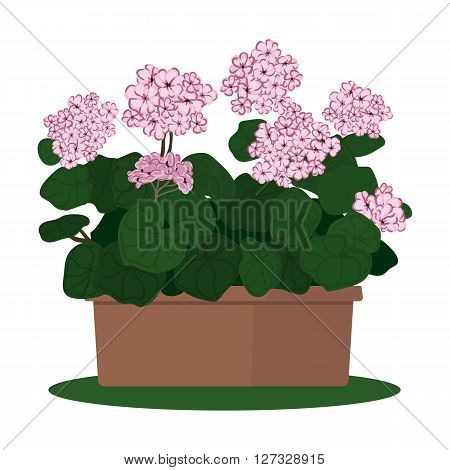 Vector illustration plant in pot. Blooming geranium in pot isolated on white backgraund