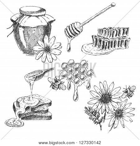 vector honey elements set. hand drawn honey jar, spoon, stick, cells, camomile. ink sketch of organic nature product