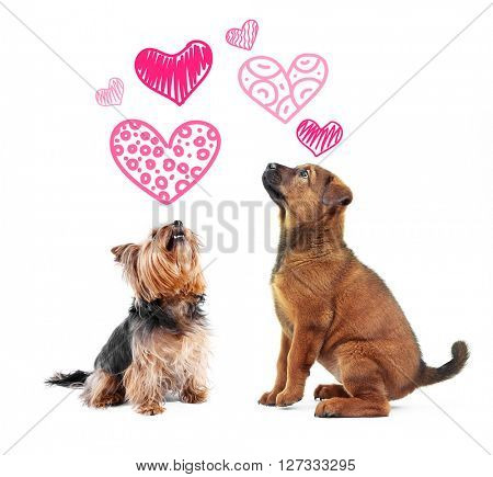 Two dogs together, isolated on white