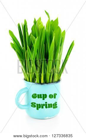 Wild leek in mug with inscription Cup of spring