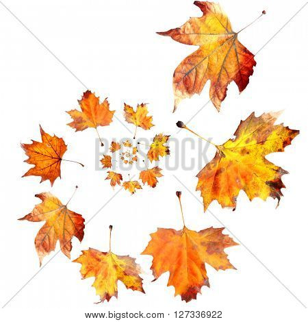 Dry autumn leaves spiral isolated on white
