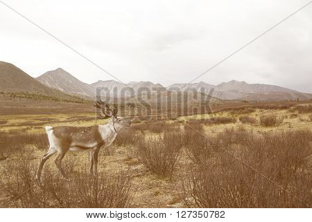 Deer Looking Over At The Beautiful Nature Scenic Concept