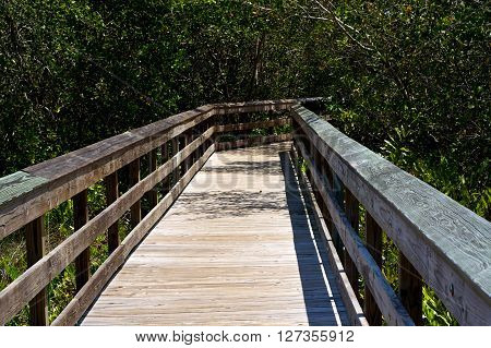 Railed Wooden Boardwalk In Florida