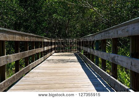 Wooden Boardwalk In Florida