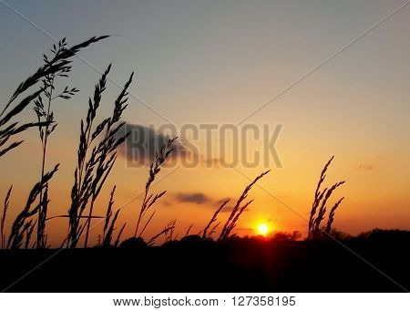 A pasture in oklahoma with a view of the sunset. ** Note: Soft Focus at 100%, best at smaller sizes