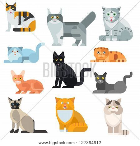 Cat breeds poster cute pet animal set vector illustration. Cat breed animal and cartoon cat breed set. Mammal character human friend cat breed animals icons. Character cat portrait friend feline.