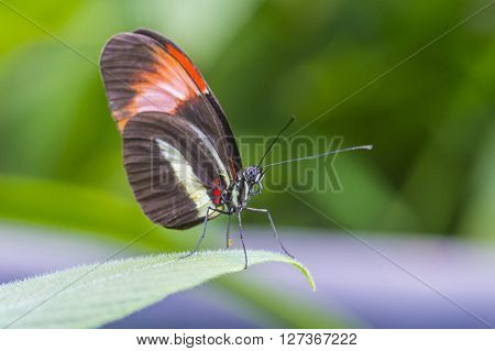butterfly on a flower in costa rican rain forest