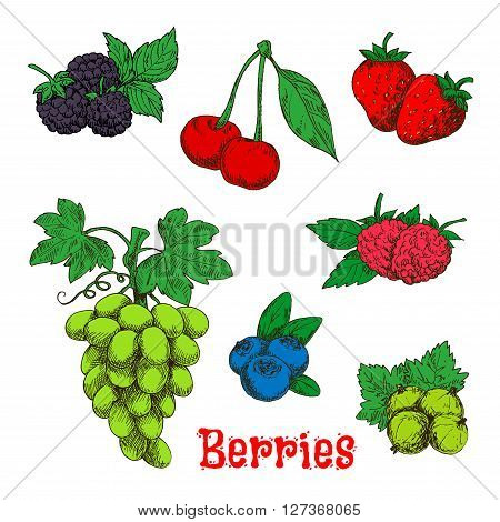 Fresh bunch of sweet and juicy green grape, red raspberries, strawberries and cherries, blackberries, gooseberries and blueberries fruits sketch symbols. Colorful appetizing berries with leaves design for agriculture harvest and organic farming concept