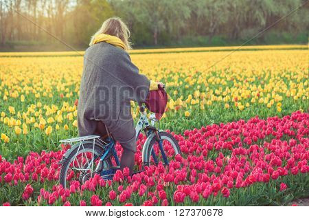 Female in a coat and hat riding bike through tulip fields in the south-west of the Netherlands
