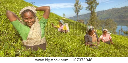 A group of happy tea pickers Concept