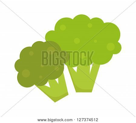 Fresh green broccoli isolated on white background vegetarian, raw, healthy food vector. Broccoli vegetarian raw and healthy organic broccoli. Broccoli freshness diet eating ingredient.