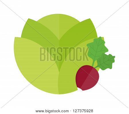 Green cabbage and red radish vegetable vegetarian fresh salad food vector illustration. Vegetable fresh cabbage and vegetarian green cabbage. Vitamin nature agriculture cabbage head.