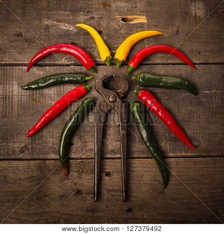 Colorful chili peppers with an old used pliers. Food concept image of hot chilies do not touch with your hands